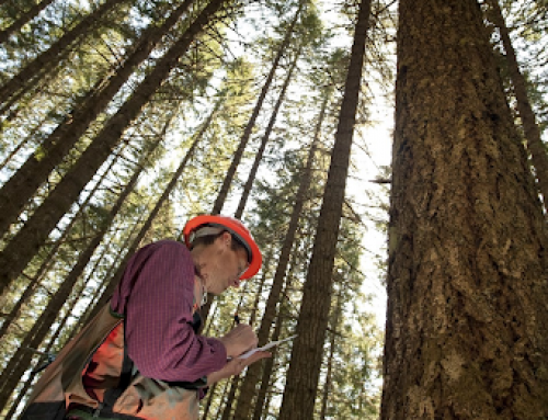 Supporting Forest Contractor Safety: a testimonial for the Safetree programme